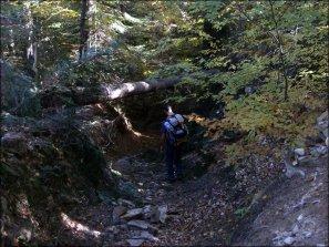 Gorce - przejście pod powalonym drzewem - 5 października 2013